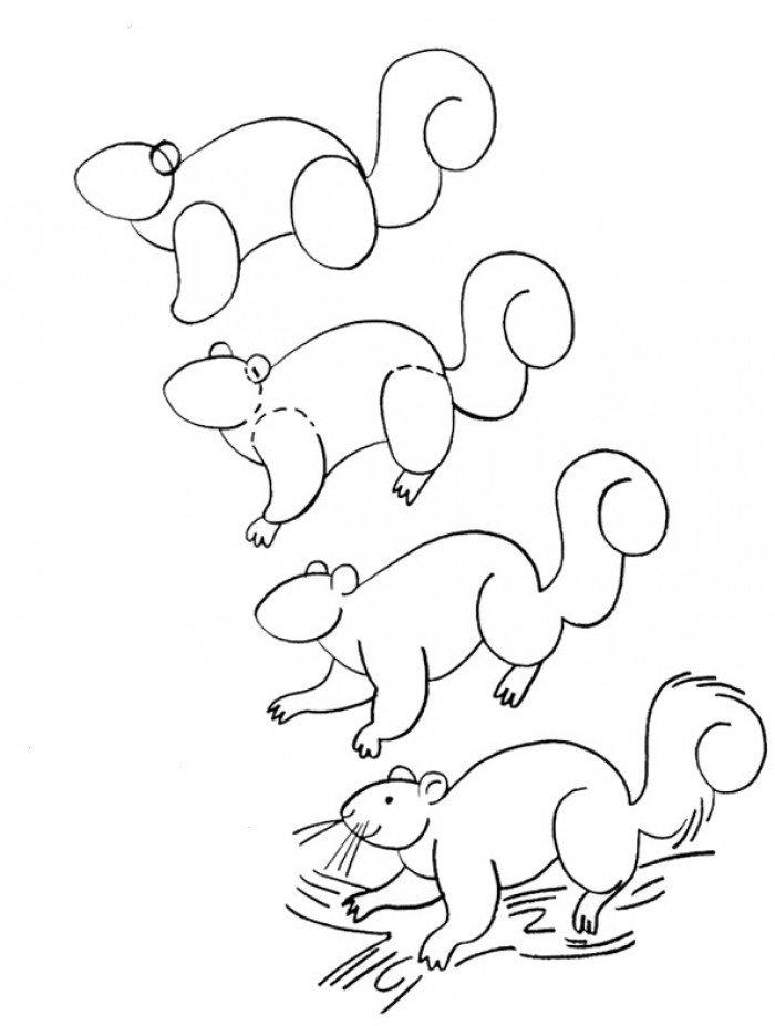 Как рисовать белку, схема