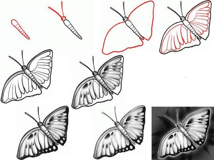Як намалювати метелика крок за кроком, фото 2