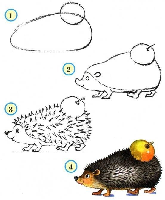 Как нарисовать ежика поэтапно, фото 8