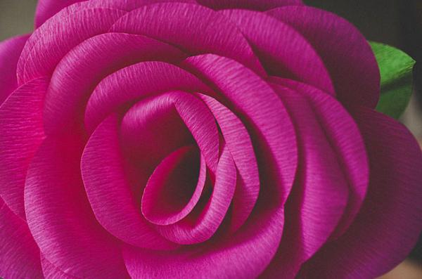 Розы из гофробумаги — устрой тематическую вечеринку!