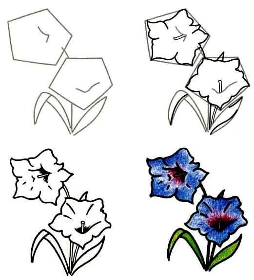 Как нарисовать цветок - Горечавка, фото