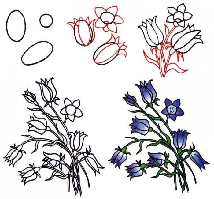 Как нарисовать цветок - Колокольчики, фото