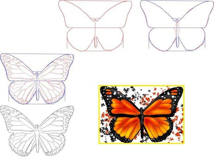 Як намалювати метелика крок за кроком, фото 6