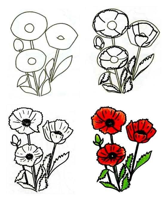 Как нарисовать цветок - Маки, фото