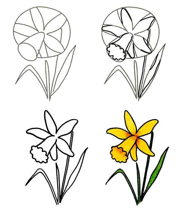 Как нарисовать цветок - Нарциссы, фото 3