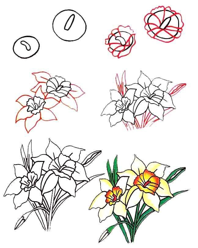 Как нарисовать цветок - Нарциссы, фото 2