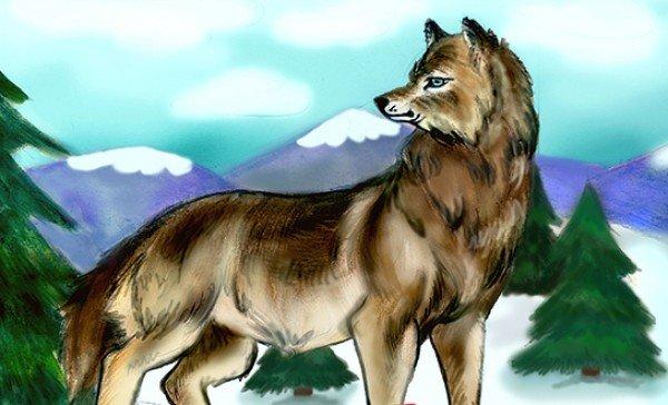 Учимся рисовать волка