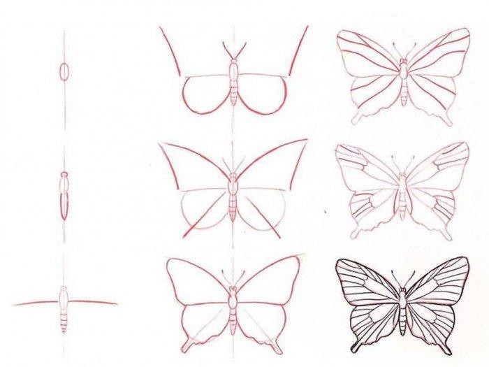 Як намалювати метелика крок за кроком, фото 10
