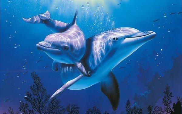 """Результат пошуку зображень за запитом """"всесвітній день океанів"""""""
