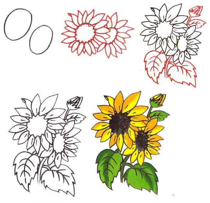 Як намалювати квітку соняшника, фото