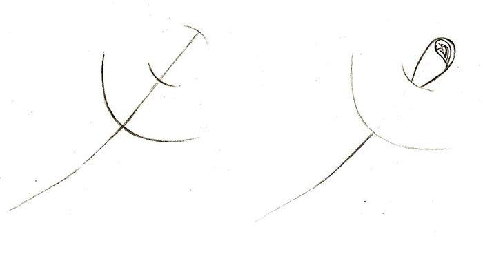 Как нарисовать розу шаг за шагом – схема, фото 8