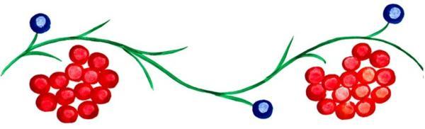 Элементы петриковской росписи: ягоды