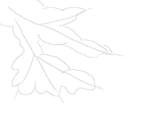 Рисуем снегирей на ветке. Шаг 2
