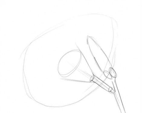 Як малювати лілію олівцем