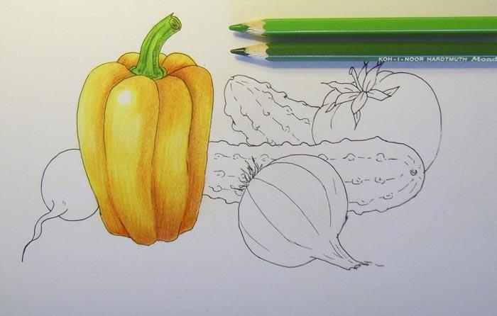 Овощи фрукты картинки как рисовать