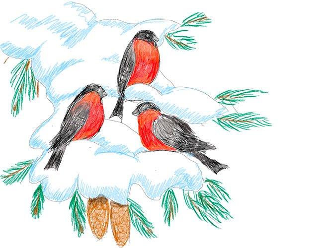 Рисуем снегирей на ветке. Шаг 9
