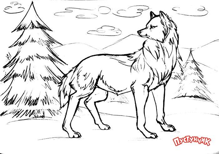 Як намалювати вовка крок за кроком, фото 18