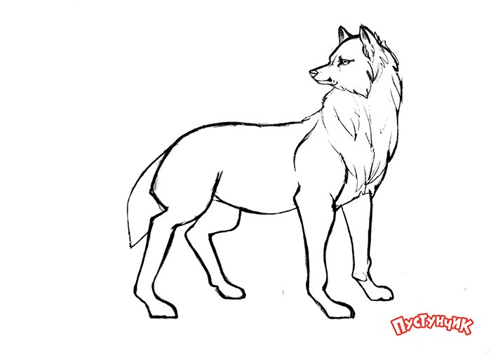 Як намалювати вовка крок за кроком, фото 16