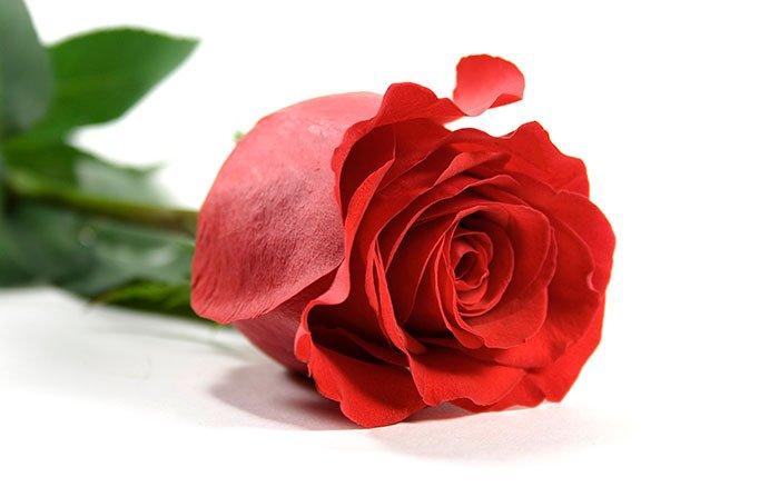 Як намалювати троянду крок за кроком – схема, фото 6