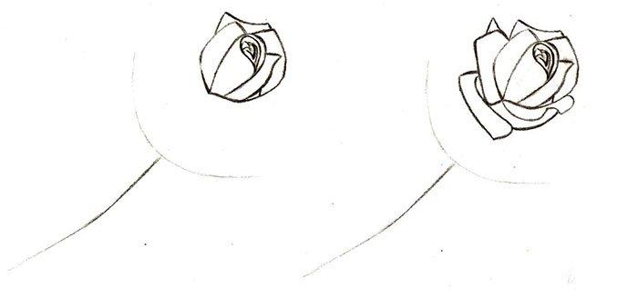 Как нарисовать розу шаг за шагом – схема, фото 9