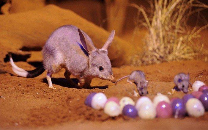 Как празднуют Пасху в Австралии