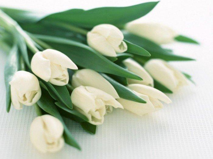 Букет білих тюльпанів на 8 Березня