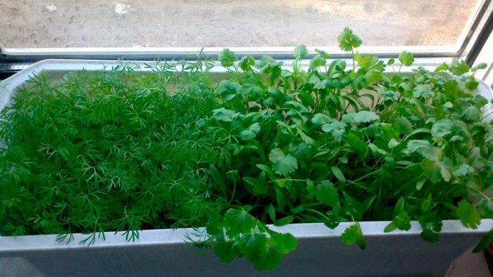 Мини-огород на балконе своими руками - фото 6