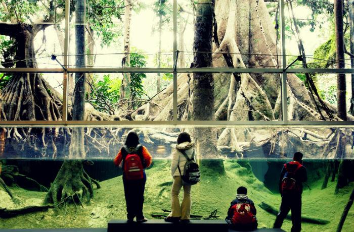 Музей науки CosmoCaixa - Затоплений ліс