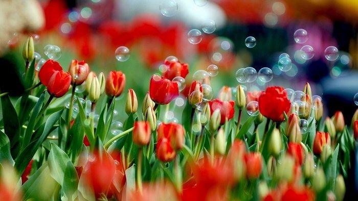 Як зробити мильні бульбашки вдома?