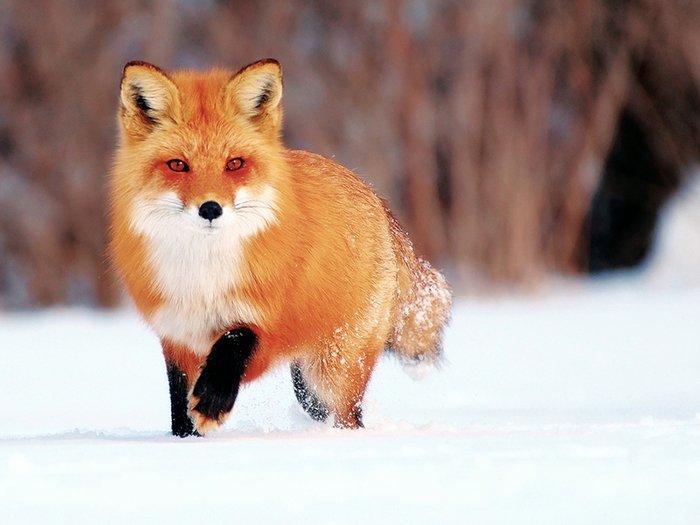 Прекрасные стихи о зиме, фото 10