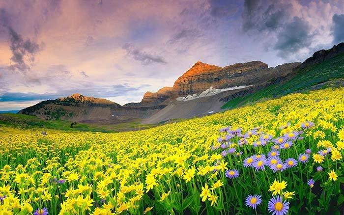 Долина квітів, Індія