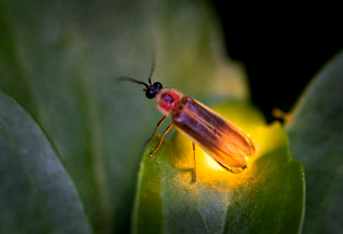 стихи о насекомых