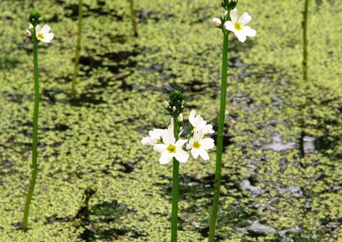 Найкрасивіші весняні квіти України. Де побачити їх цвітіння?