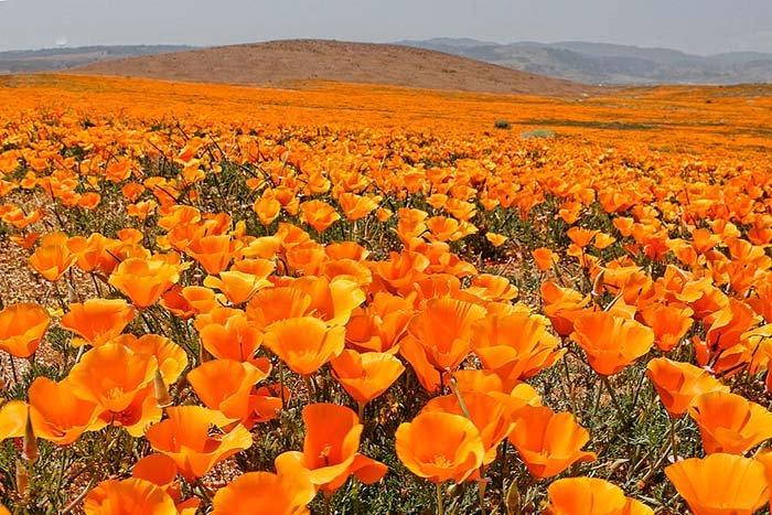 Долина маков, Аризона