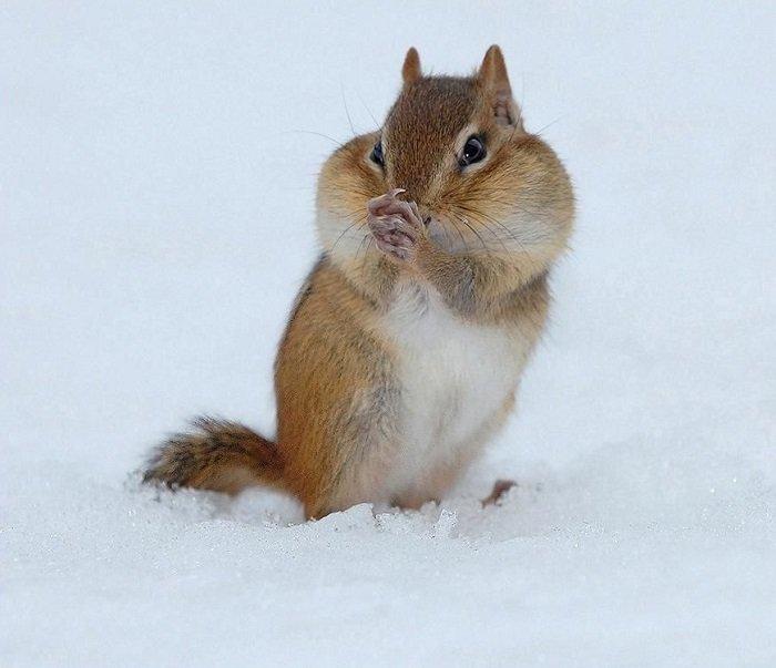 Як звірі готуються до зими, фото 2