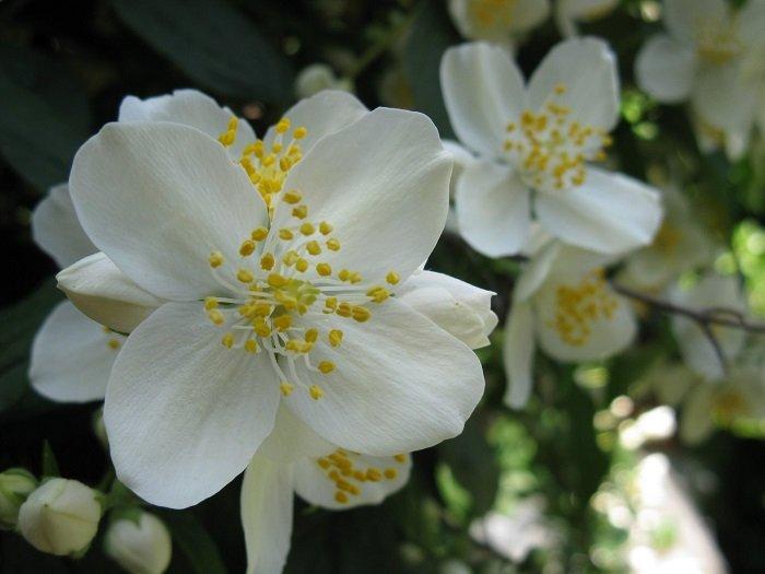 Азбука цветов
