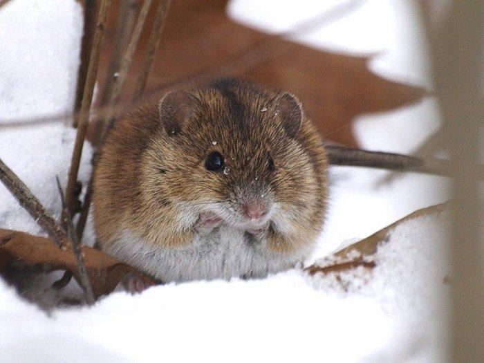 Як звірі готуються до зими, фото 1