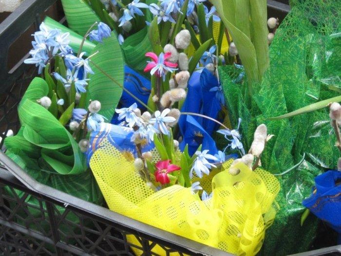 Первоцветы, занесенные в Красную книгу Украины - фото 1