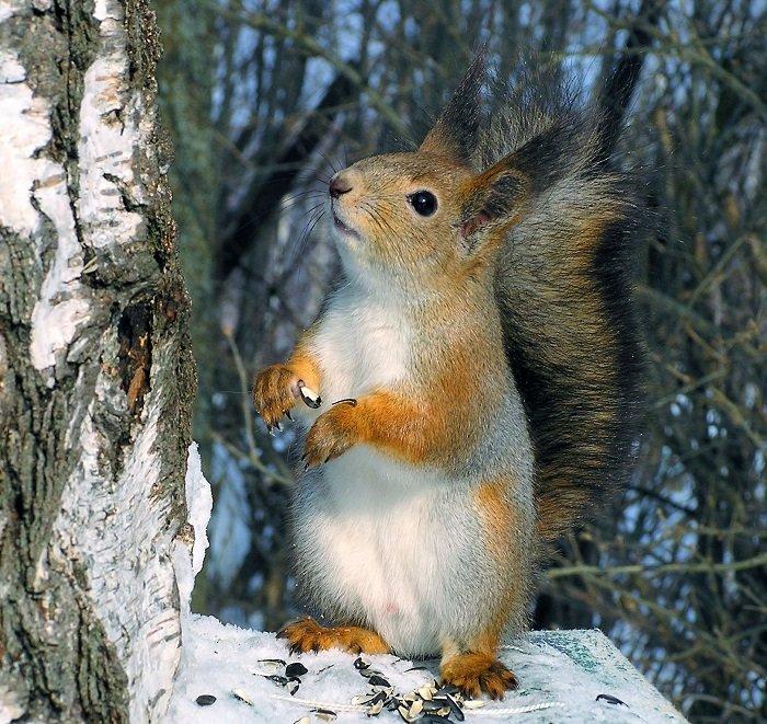 Як звірі готуються до зими, фото 6