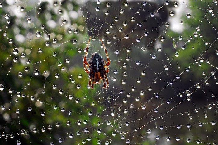 Як комахи готуються до зими, фото 5