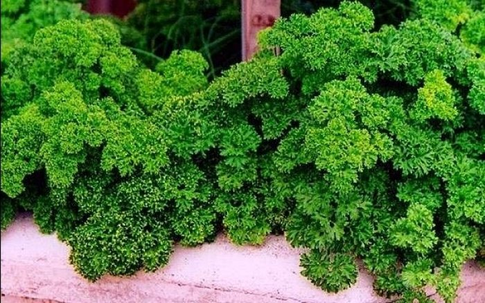 Мини-огород на балконе своими руками - фото 17