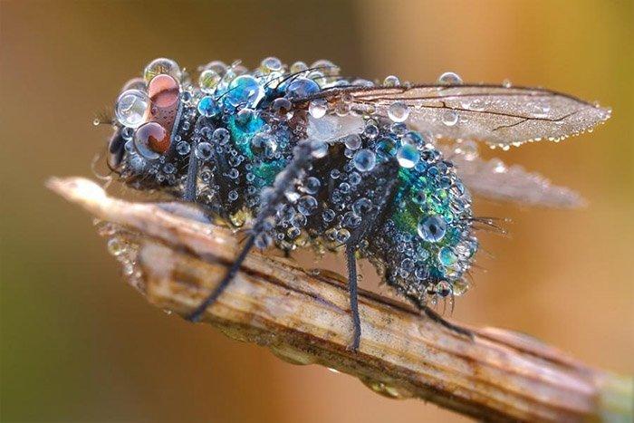Як комахи готуються до зими, фото 6
