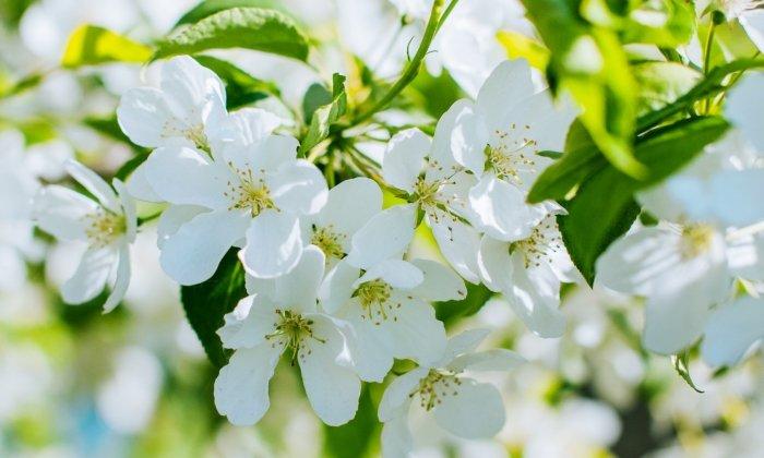 Пословицы и поговорки о весне - фото 3