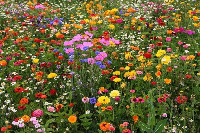 Азбука квітів