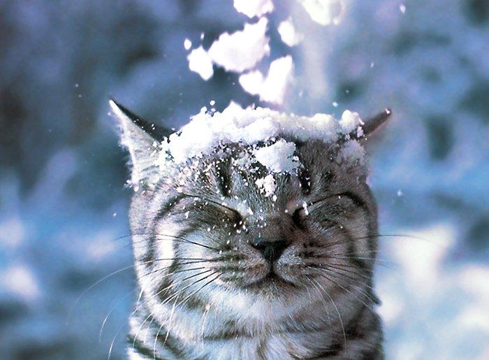 Прекрасные стихи о зиме, фото 5