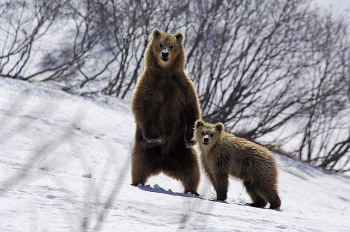 Как звери готовятся к зиме, фото 9
