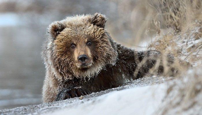 Как звери готовятся к зиме, фото 8