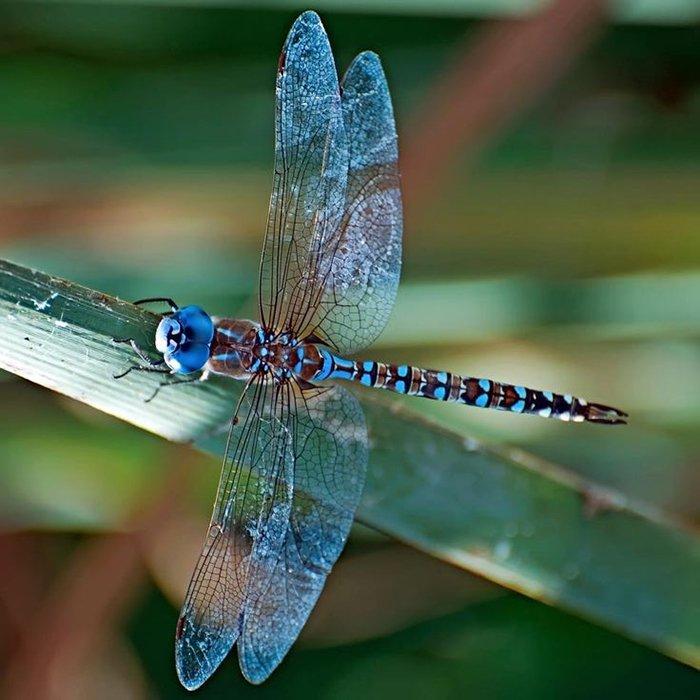 Як комахи готуються до зими, фото 1