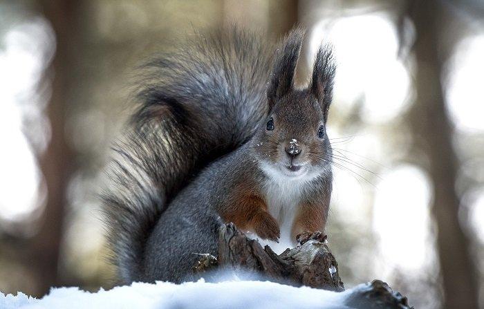 Як звірі готуються до зими, фото 7