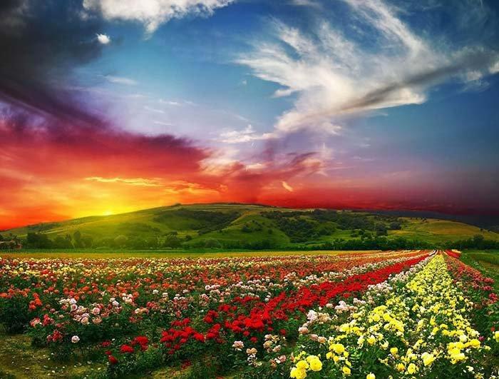 Долина троянд, Болгарія